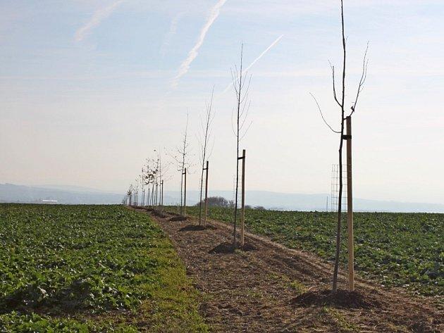 600 metrů dlouhý větrolam nad Velehradem zabrání větrné i vodní erozi. Ve spodním keřovém patře najde útočiště drobná zvěř.
