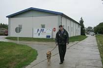 """Strážníci se při aktuální preventivní akci zaměří i na zatoulané psy. Bloudící čtyřnohé """"tuláky"""" převezou do kotců technických služeb. Ilustrační foto."""
