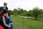 Na kopci nad Mařaticemi postaví vpondělí máj a odstartují pasteveckou sezonu. Ilustrační foto.
