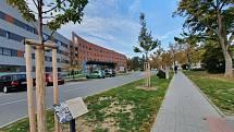 Celkem 13 nových stromů třešně ptačí vysadili ve středu 20. října před centrální budovou chirurgických a interních oborů podél parkoviště v Uherskohradišťské nemocnici v rámci projektu Stromy pro nemocnici.