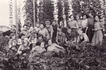 Chmelová brigáda studentů z Uherského Hradiště v roce 1955.