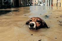 Symbol červencových povodní v roce 1997. Ilustrační foto.