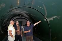 K mořským živočichům cítí Steve Lichtag respekt. Strach z nich ale nemá.