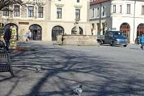 Centrum Uherského Hradiště se dlouhodobě potýká s velkým výskytem holubů.