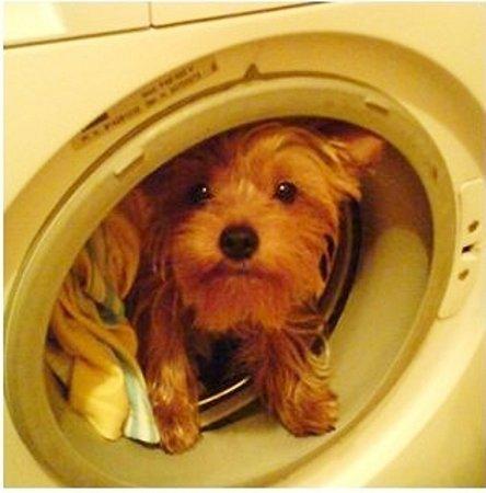 BERTÍČEK. No jo, když já tak rád spinkám ve špinavém prádle.