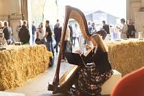 Vernisáž výstavy Design? to jde úplně mimo mě, v areálu mmcité při festivalu Wifič Ven! U harfy Lucie Fajkusová-Vápová.