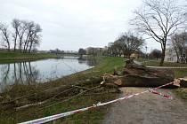 Stezku podél řeky Moravy v Uherském Hradišti o víkendu blokoval seřezaný strom.