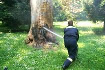 ZÁSAH. Hasiči přijeli k hořícímu stromu pouhou minutu po ohlášení události.