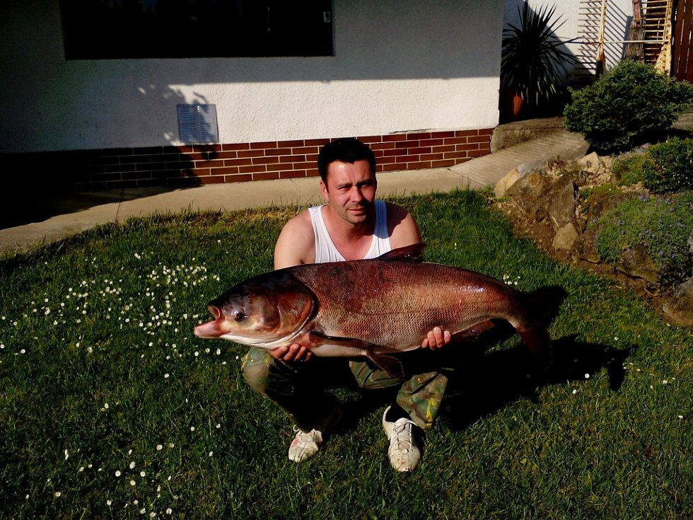 Soutěžní číslo 26 – Miroslav Rybička, tolstolobik, 113 cm, 22,7 kg.