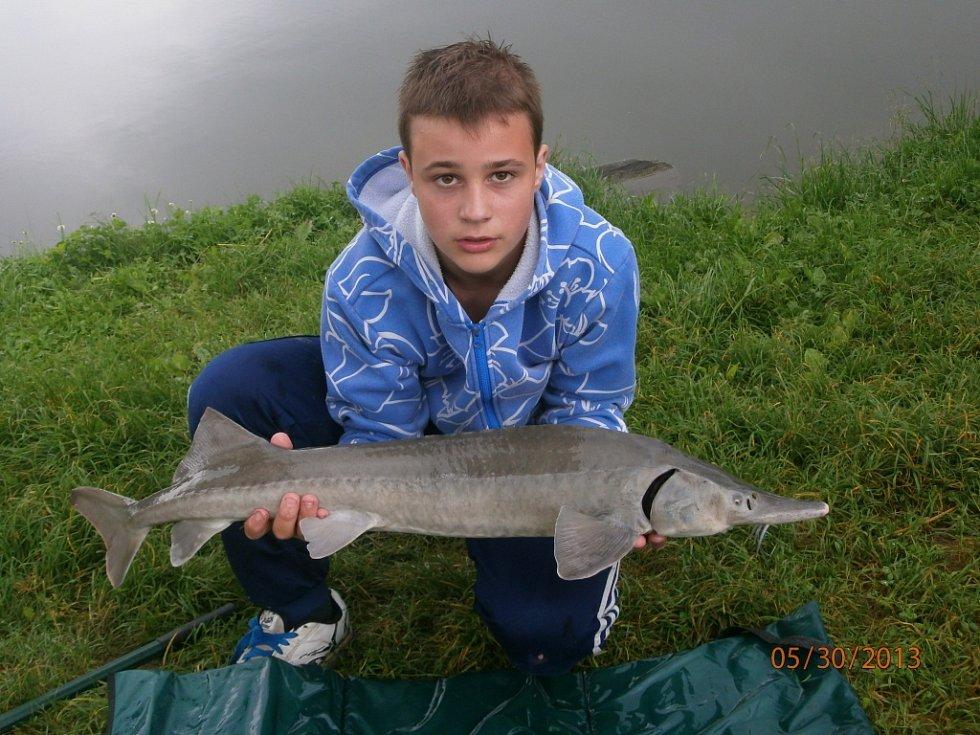 Soutěžní číslo 182 – Michal Staňo, jeseter, 93 cm, nevážen.