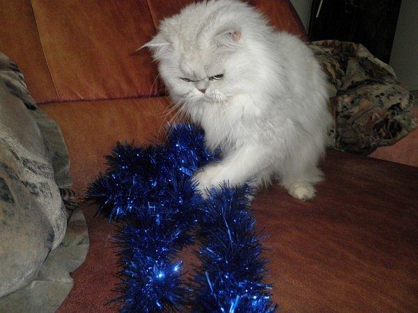 CHALIF MATHIAS. Nejraději si hraji sozdobami na vánoční stromek.
