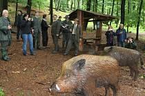Úspěšná spolupráce Lesů České republiky a Lesů Slovenské republiky je patrná na lesní naučné stezce, kde lze potkat lesní zvěř v životní velikosti, která před vámi neuprchne.