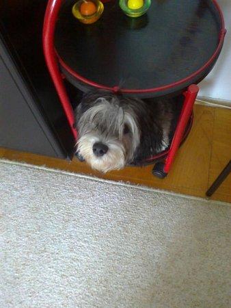 Havanský psík Fredy a jeho oblíbené místo.