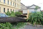 Větrné poryvy při bouřce 13. června zpečetily osud téměř 20 metrů vysoké lípy v blízkosti hlavní křižovatky v Uherském Hradišti u parkoviště Střední uměleckoprůmyslové školy.