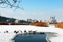 Sevření v ledu se divoké kachny a husy neobávají, svým pohybem naopak zabraňují zamrznutí.