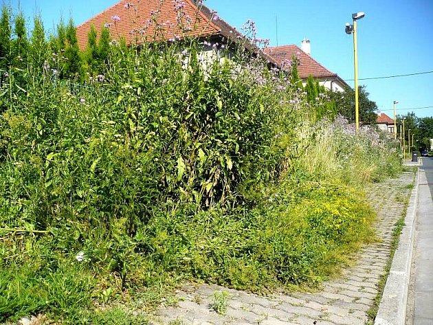 Plocha před domy v jarošovské ulici U Bagru připomíná místy džungli.