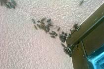 Obyvatelé bytového domu v Hradišti mají problémy se hmyzem. Prý kvůli sousedce, která sbírá oblečení.