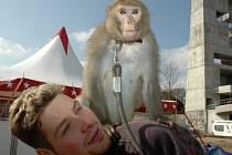 Berouskovy cvičené opice dovádějí na miniponících.