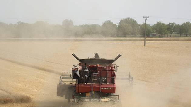 Kombajny vyjely na pole sklízet obilí.