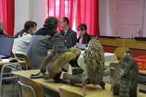 Před komisí. Při zkoušce z dospělosti se Johana Babrnáková (vpravo) pořádně zapotila.