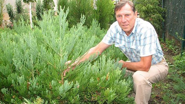 Petr Brabec má radost z krásných sazenic sekvojovců, které se ne každému daří vypěstovat