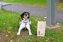 Město Uherské Hradiště instalovalo devět schránek na papírové sáčky pro psí exkrementy.