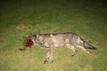 Oba zastřelení psi byli převezeni k veterináři, který provede testy na možné nakažení  vzteklinou.