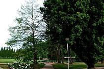 Lípa zasazená 22. dubna 1990 v zahradě bývalého kláštera Janem Pavlem II. zvítězila v anketě Strom Velehradu.