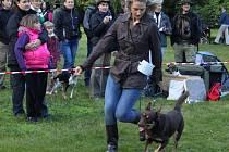 Pod zeleným baldachýnem stromů v zámecké zahradě Buchlovice se uskutečnila v sobotu oblastní výstava psů všech plemen.