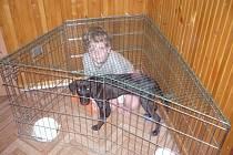 Léčba ve speciální terapeutické kleci je podle terapeuta vhodné vložit do uzamčeného prostoru dvě misky s vodou, aby pes a dítě nepili z jedné nádoby.