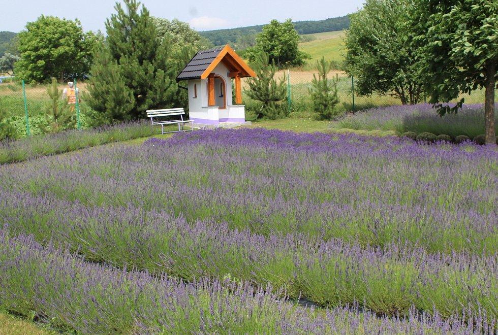 Levandulová farma rodiny Přikrylovy.