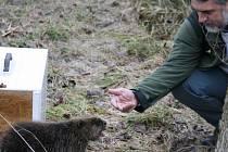 Odstřel bobrů v Březolupech již začal. K odstranění těchto zvířat má pomoci také speciální odchytový box, který k tamnímu rybníku přiveze přírodovědec Vlastimil Kostkan (na snímku).