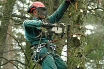 Kácení stromů v Tyršových sadech.