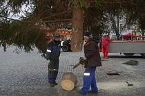 Postavit vánoční strom v Uherském Hradišti trvalo pár desítek minut.