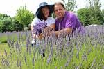 Levandulová farma rodiny Přikrylovy. Manželé při sklizni.