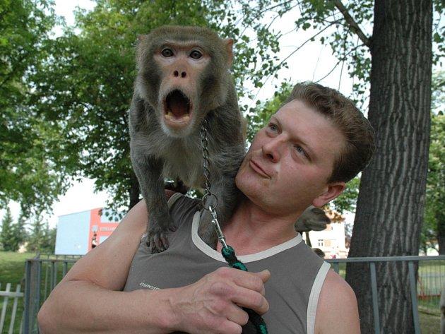 Opičák Chicko na rameni spolumajitele cirkusu.
