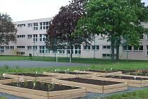V areálu Základní školy Za Alejí vzniká zahrada s léčivými bylinami.