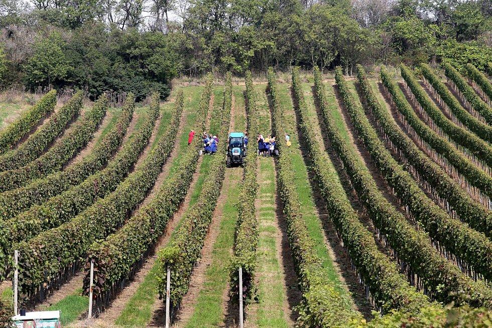 Vinařství na Slovácku. Ilustrační foto