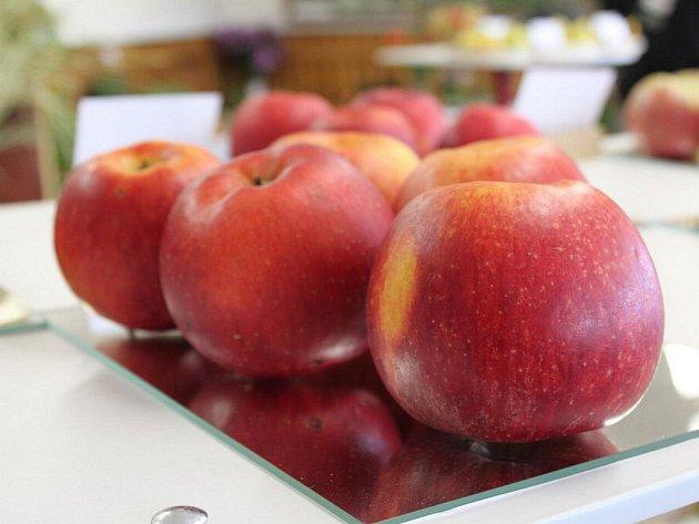 Do takových jablek by se nejeden návštěvník rád zakousl.
