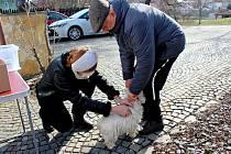 Očkování psů na Slovácku - březen 2021