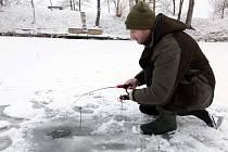 S ústupem mrazů v těchto dnech vrcholí lov z ledu na dírkách. Jedním z míst, kde se doposud kvůli němu srocují davy, je rybník v areálu farmy Halda v Boršicích