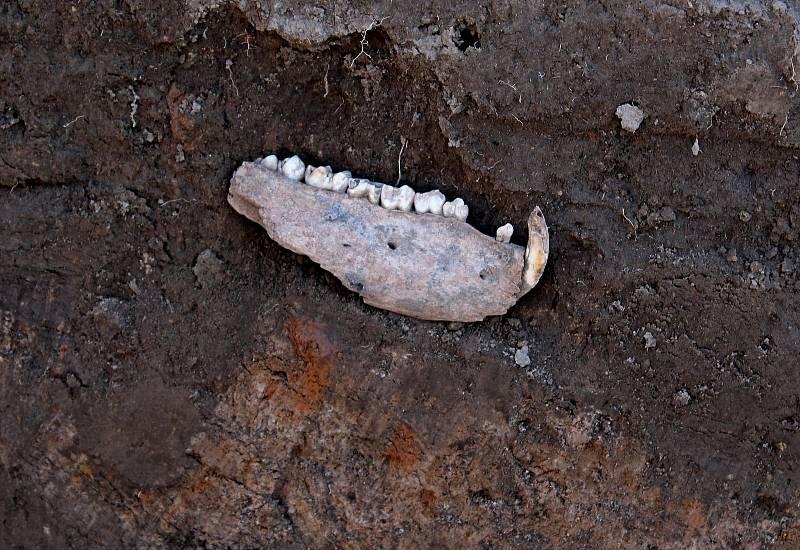 Co se podařilo objevit pod povrchem Archeoskanzenu Modrá.