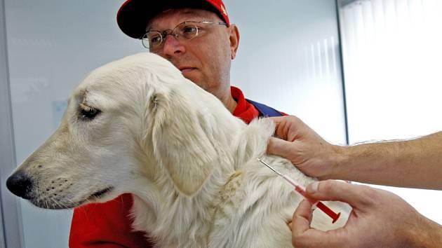 Očipování psa pomocí čipu umístěného v duté jehle. Ilustrační foto.