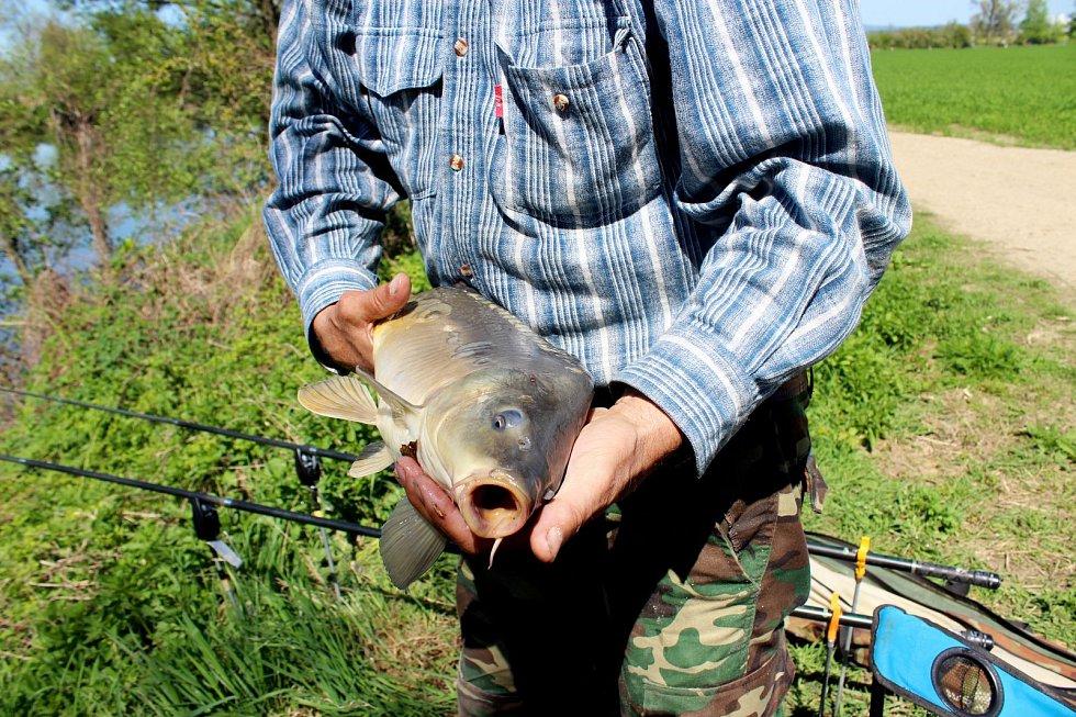 U VODY. 15. ročníku jarních závodů se vKostelanech nad Moravou zúčastnilo 101 dospělých i malých rybářů ze Slovácka, východní a jižní Moravy.