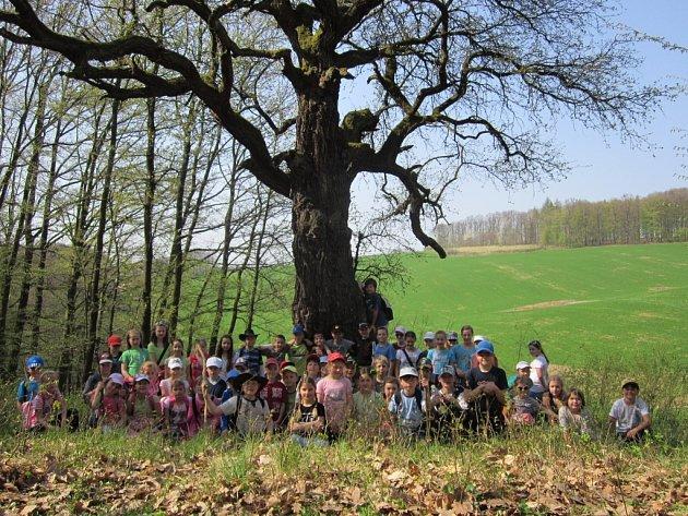 Mezi prvními návštěvníky hrušně po jejím vyhlášení památným stromem byli žáci hradčovické ZŠ.