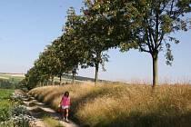 Vytvořit propojenou síť cest pro pěší i cyklisty všech svých katastrálních území. Takový plán má vedení pelhřimovské radnice. Konkrétně se jedná o obnovu vytipovaných cest a vznik stromořadí. Ilustrační foto.