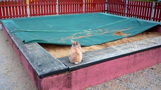 Králík na dětském pískovišti ohrožuje zdraví hrajících se dětí.