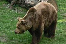 Medvěd.