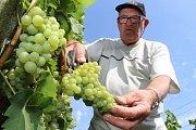 Jaroslav Vaďura z vinařství Vaďura v Polešovicích letos dokonce začal se sklizní rané odrůdy Kotrč už 15. srpna.