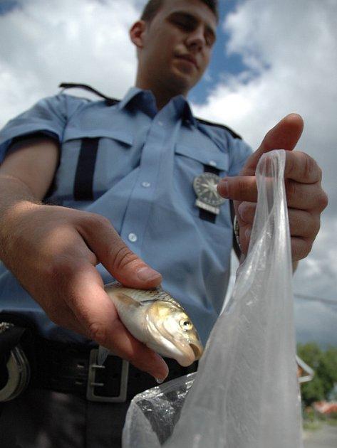 Teprve pitva otrávených ryb odhalila příčinu jejich smrti .